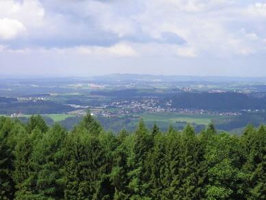1pilzwaldaufnahmen
